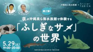 夜の沖縄美ら海水族館で体験する「ふしぎなサメ」の世界