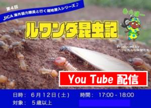 YouTube配信:はるちゃんのルワンダ昆虫記☆